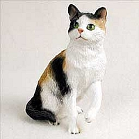 Shorthaired Calico