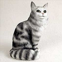 Maine Coon Silver Tabby