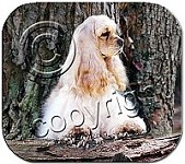 Cocker Spaniel Blonde Mouse Pad